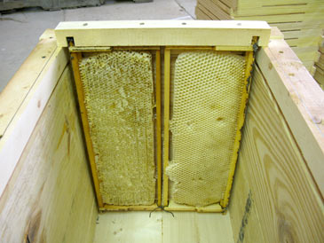 Langstroth-to-Layens Hive Conversion | Free Plans ...